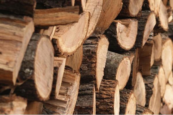 В Україні планують створити ринок деревини