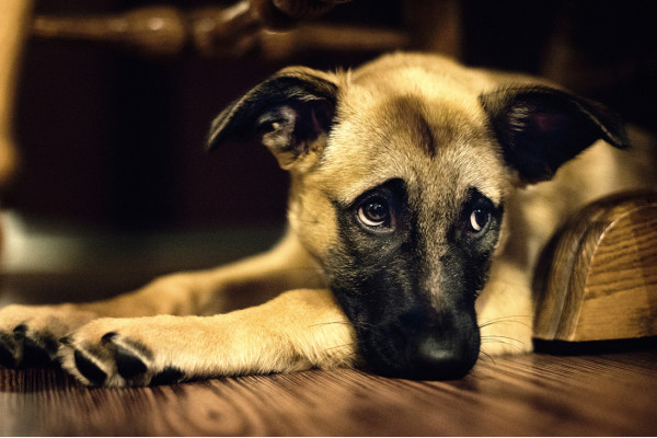 В Україні ухвалили законопроєкт про заборону жорстокого поводження із тваринами